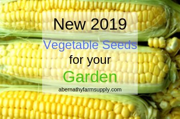 Vegetable Seeds for your Garden