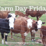 Farm Day Friday–Cows on the Farm