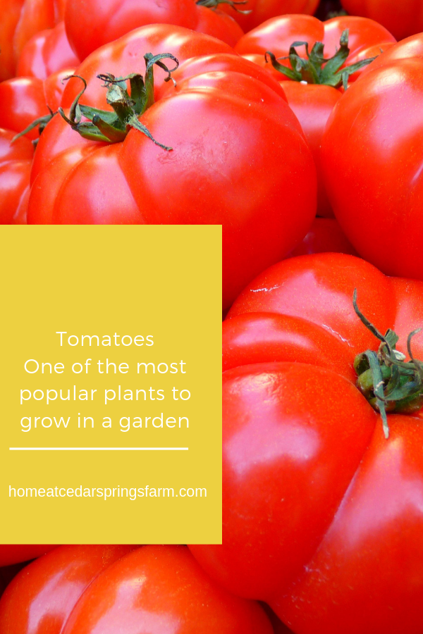 Vegetables To Grow In Your Garden
