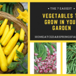 The 7 Easiest Vegetables To Grow In Your Garden