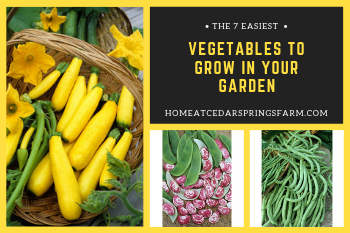 Vegetables To Grow